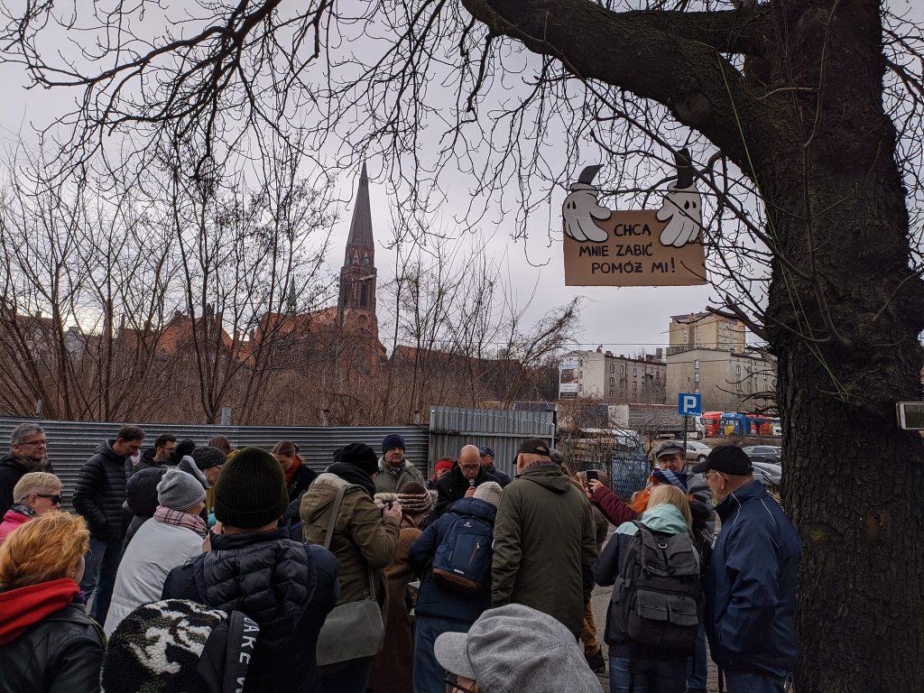 Bronimy stuletnich kasztanowców w Katowicach